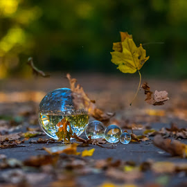 autumn by Ionut Olaru - Artistic Objects Glass ( crystal ball, autumn, autumn colors )