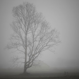 One Might Expect the Undead by Duncan Rea - Landscapes Prairies, Meadows & Fields ( farm, field, creepy, eerie, tree, zombie, undead, fog, dark, dismal,  )
