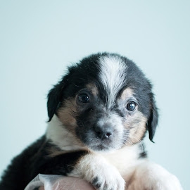 Hello there! by Inese Keiša - Animals - Dogs Puppies