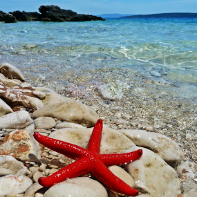 sea star by Čedna Dadić - Landscapes Beaches ( red, blue, star, sea, hvar, island )