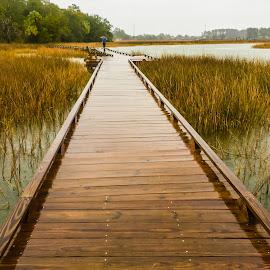 by Shari Linger - Instagram & Mobile iPhone ( savannah, swamps, oatland island park, georgia, marsh, tybee island )