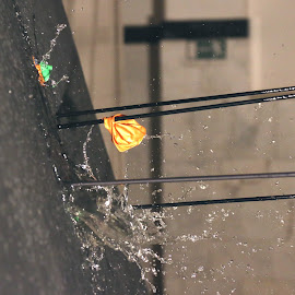 arrow in motion by Liviu Nanu - Sports & Fitness Other Sports ( water, splashing, arrow, balloon )