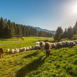 Herd in the spring by Stanislav Horacek - Landscapes Prairies, Meadows & Fields