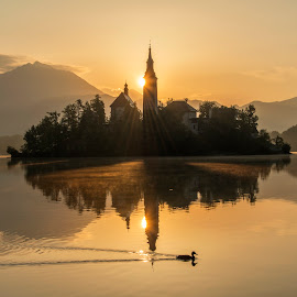 Peaceful Sunrise at Lake Bled by Aleš Krivec - Landscapes Mountains & Hills ( water, reflection, europe, church, beautiful, white, forest, lake, architecture, spring, reflecting, island, mountains, tree, nature, fog, bled, castle, sunrise, mist )