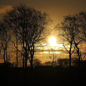 Frame the Sun with Trees by James Holdsworth - Landscapes Sunsets & Sunrises ( silhouette, trees, sunrise )