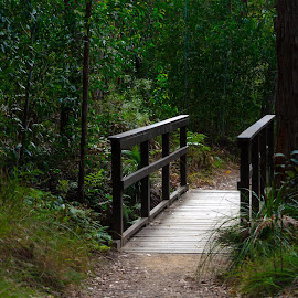 The Walking Bridge by Ruth Tomlinson - Buildings & Architecture Bridges & Suspended Structures ( trail, path, forest, green, walkway, bridge, trees,  )
