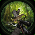 Birds Hunting In Jungle 2017
