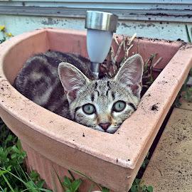 I'm a flower? by Dobrin Anca - Animals - Cats Kittens ( green, cat, garden, brittany, flower )