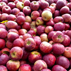 Apple Picking Time by Michael Villecco - Food & Drink Fruits & Vegetables (  )
