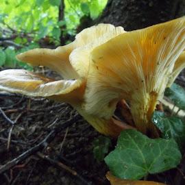 Гъби by Georgi Kolev - Nature Up Close Mushrooms & Fungi ( гъби., земя., гора., зелен., листа. )