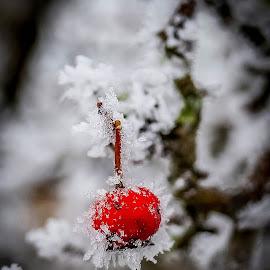 by Sue Lascelles - Nature Up Close Gardens & Produce