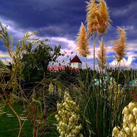 Magic by Biliana Vitanova - Landscapes Prairies, Meadows & Fields ( #majik# )