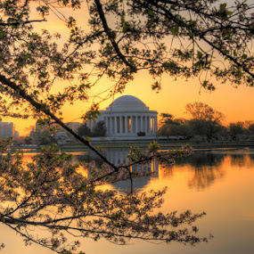 Jefferson Memorial by Wenjie Qiao - Buildings & Architecture Statues & Monuments ( washington dc, sunrise, cherry blossom, tidal basin )