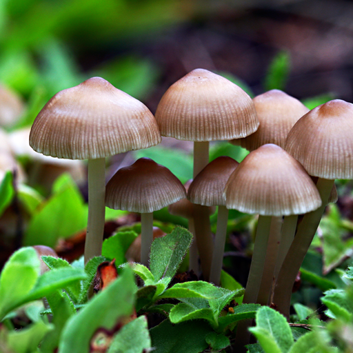 Kingdom Fungi (app)