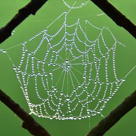 by Eugenija Seinauskiene - Nature Up Close Webs