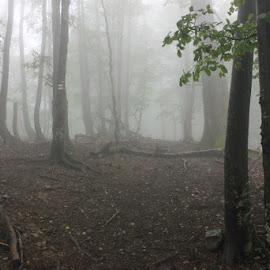 Misty forest by Konstantin Khokhlov - Landscapes Weather ( fog, three, forest )