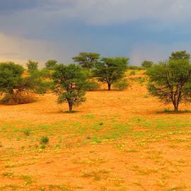 Kalahari  by Johannes Kleinhans - Landscapes Deserts ( red dunes, thorn trees )
