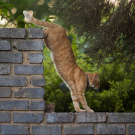 by Wendy Berning - Animals - Cats Playing