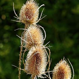 Tous secs by Gérard CHATENET - Nature Up Close Other plants
