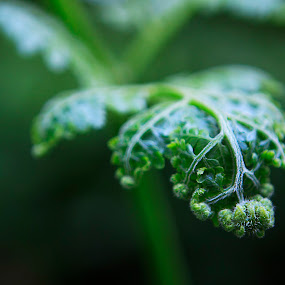 Fern by Cristobal Garciaferro Rubio - Nature Up Close Other plants ( fern, nature, jungle, leaf, leaves, bokeh )