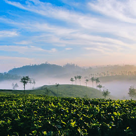 Tea Plantation Sunrise by Andreja Novak - Landscapes Travel ( relax, tranquil, relaxing, tranquility )