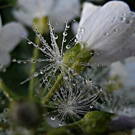 Spring Rainy Stars by Marija Jilek - Nature Up Close Natural Waterdrops