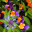 Out of Place by Dee Haun - Flowers Flower Gardens ( orange, purple, unknown flower, blue and magenta, violas,  )