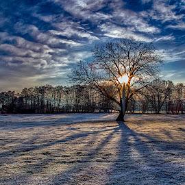 Just after sunrise by Plamen Petkov - Landscapes Sunsets & Sunrises ( clouds, winter, sky, cold, tree, trees, sunrise, landscape, sun )