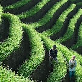 Weeding Onoin Filed by Ace Afandi - People Portraits of Men ( farm, panyaweuyan, hill, majalengka, farmer, indonesia, onion field, sunrise )