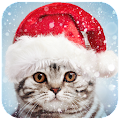 Download Full Christmas Photo Frames  APK