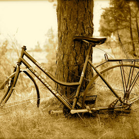 The old Bike by Bente Agerup - Transportation Bicycles ( old, sepia, nature, grass, bikes )