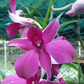 by Soumyadip Ghosh - Flowers Flower Arangements