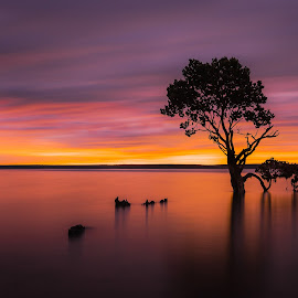 Mangrove Tree by Linda Brown - Landscapes Sunsets & Sunrises