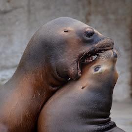 Zoo Schönbrunn by Helga Be - Animals Sea Creatures ( love )