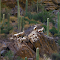 DSCN0107_herd_Rock_BigHorn.jpg