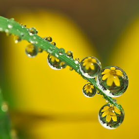 The best for you...  by Citra Hernadi - Nature Up Close Water