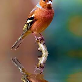 by Ad Spruijt - Animals Birds
