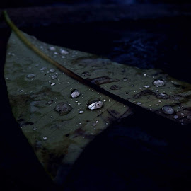 The droplets by Pujan Chatterjee - Novices Only Objects & Still Life ( novice, samsung, leaves, rain, droplets )