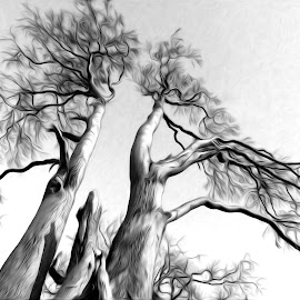 Trees by Dominic Wade - Nature Up Close Trees & Bushes ( nature, adobe photoshop, trees, north east england, county durham )