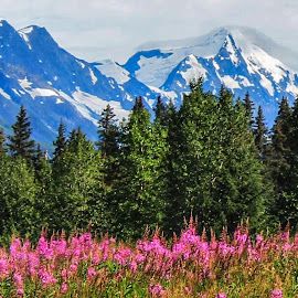 Along The Way by Patricia Phillips - Landscapes Travel ( alaska  seward highway )
