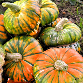 by Heather Aplin - Nature Up Close Gardens & Produce