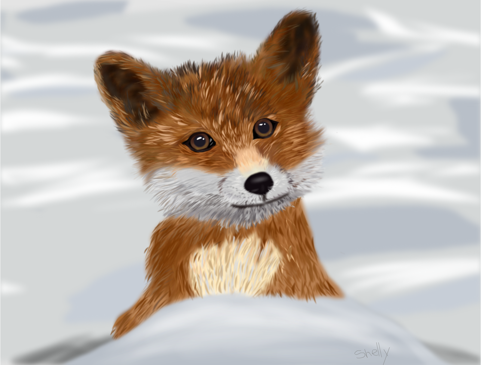Baby Fox in the Snow