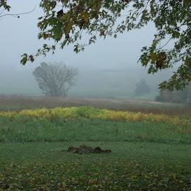 Foggy Morning by Alexander Jackson - Novices Only Landscapes ( field, mornging, foggy morning, fog, trees, landscape )