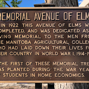 MEMORIAL AVENUE OF ELMSIn 1922 this avenue of elms was completed, and was dedicated as a living memorial to the men from the Manitoba Agricultural College, who had laid down their lives for their ...