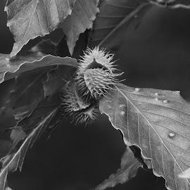 by Gerard Hildebrandt - Black & White Macro