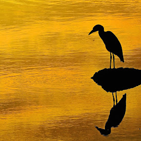 Darkened Mirror by Alan Potter - Animals Birds
