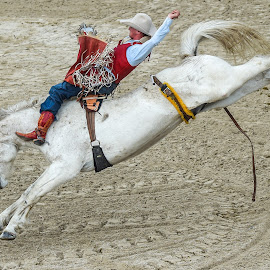 by Terry DeMay - Sports & Fitness Rodeo/Bull Riding (  )