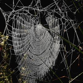 by Donna Racheal - Nature Up Close Webs
