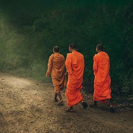 The road of monks by Sơn Hải - People Professional People ( countryside, monk, tree, viet nam, street, asia, vietnamese, vietnam, sunshine, asian )