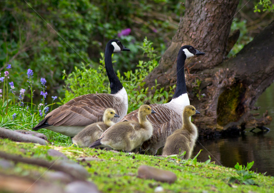 by Paul Scullion - Animals Birds